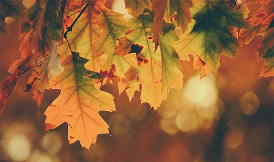 Bohemia-Motors_Przegląd-jesienny